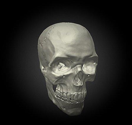 Skull- Decimated 3D Model