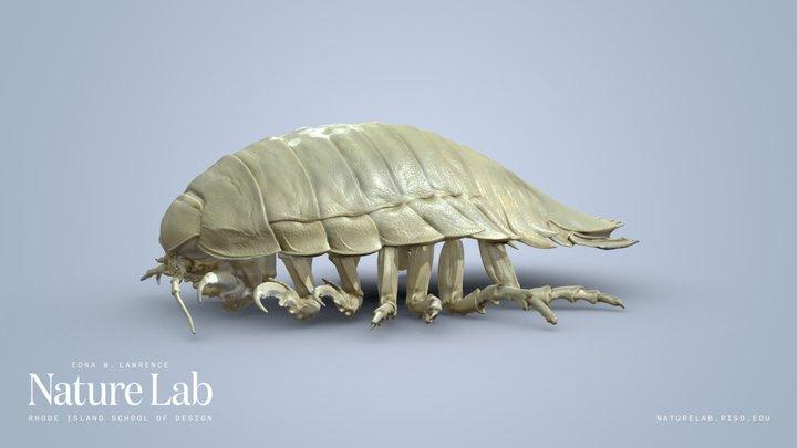 Giant Isopod 3D Model