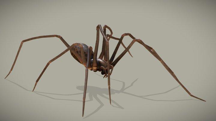 Spider - Eratigena Atrica 3D Model