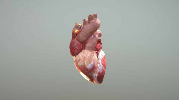 Animated Heart 3D Model