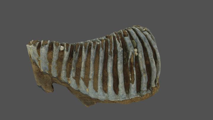Mammutzahn 3D Model