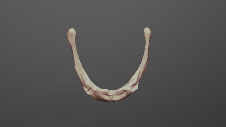Human hyoid 3D Model