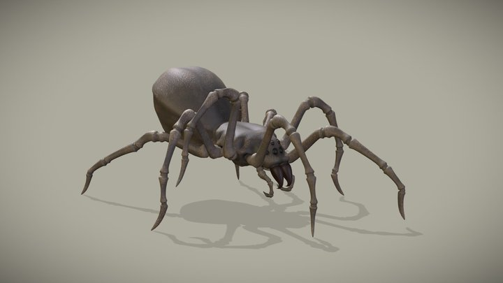 Spider Walk Cycle Animation 3D Model