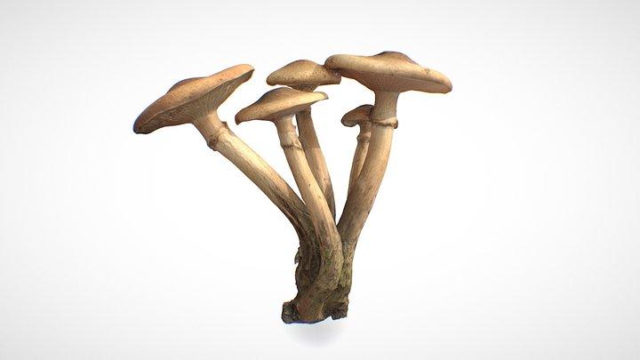 Mushroom family 4 - retopo 8K PBR 3D Model