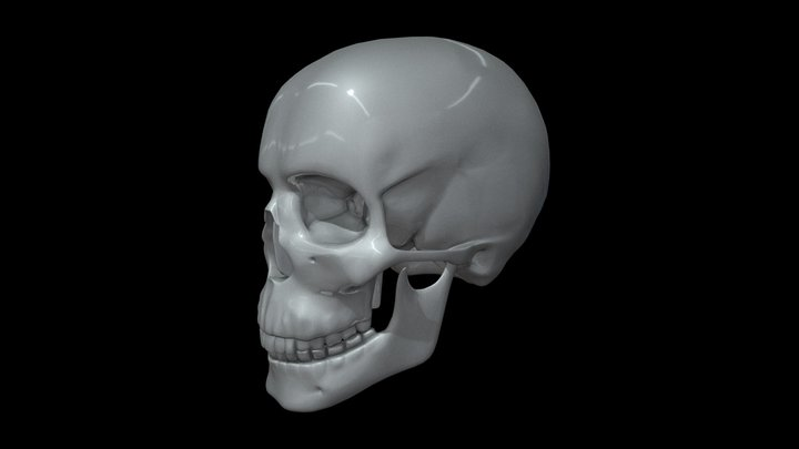 CAD Human skull M3P1D1V1Skull model preview 3D Model