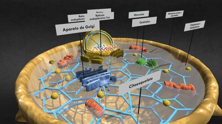 Célula Animal 3D Model