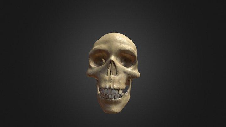 Skull Skecthfab 3D Model