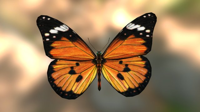 Butterfly African Monarch 3D Model