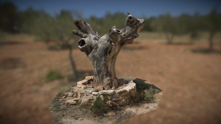El Viejo Olmo 2020 - Las Cuevas 3D Model