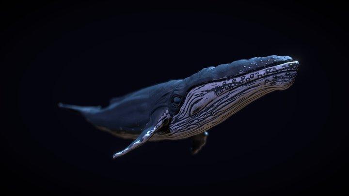 Whales 3D Model