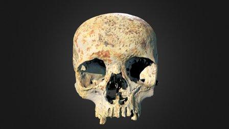 Ava's Skull 3D Model