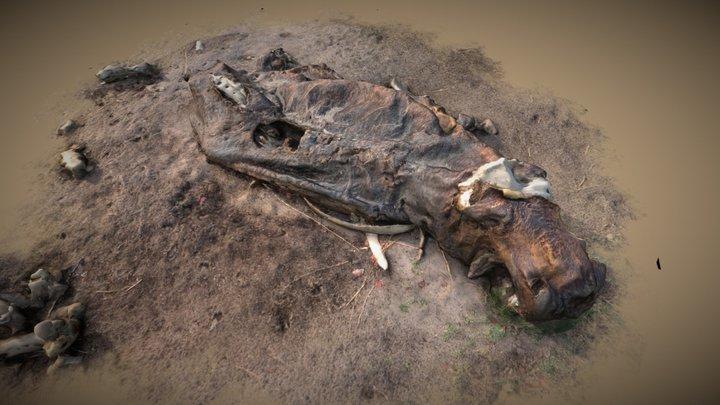 Hippopotamus carcas 3D Model