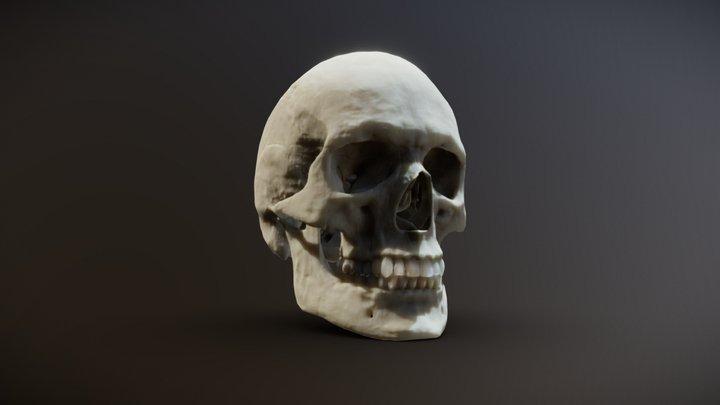 Human skull photorealistic 3D Model