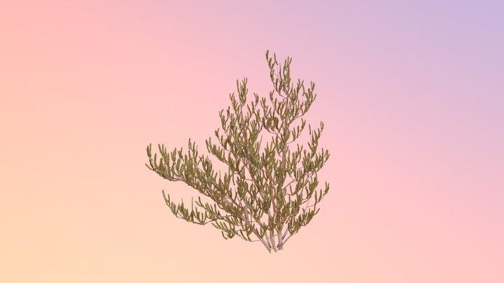 Scrub Rosemary (Ceratiola Ericoides) 3D Model
