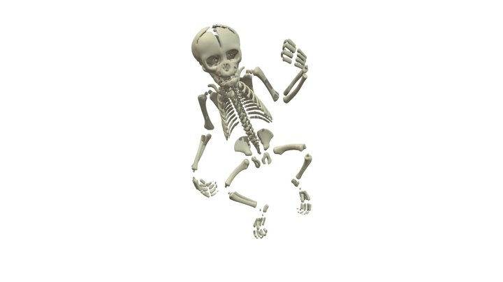 Gorilla Neonate Skeleton 3D Model