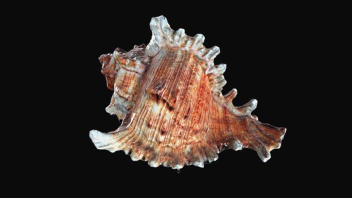 Shell27kl 3D Model