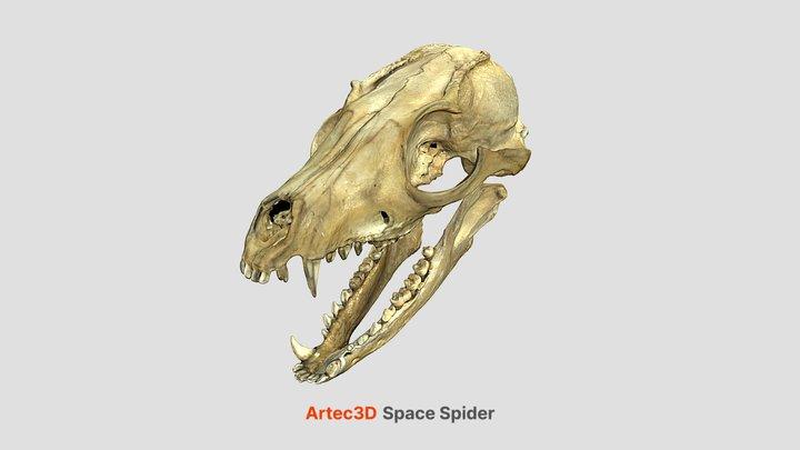 Fox Skull 3D Model