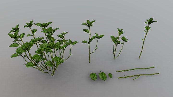 Plant - Mentha Spicata 3D Model
