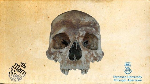 Mary Rose carpenter's skull 3D Model