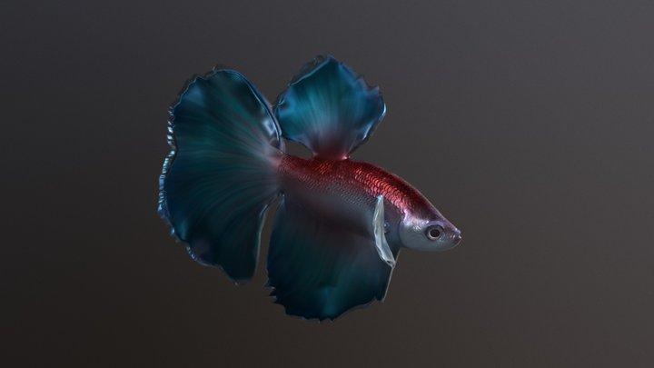 Betta Fish 3D Model