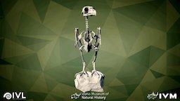 IMNH R-1183 Great Horn Owl 3D Model