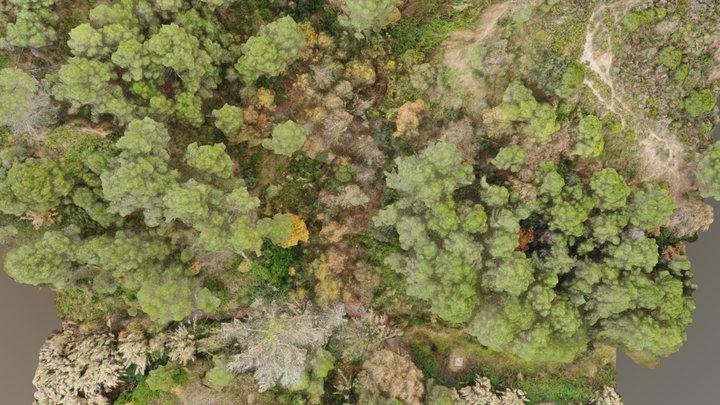 Bosc de pins i caducifolis a Piera 3D Model