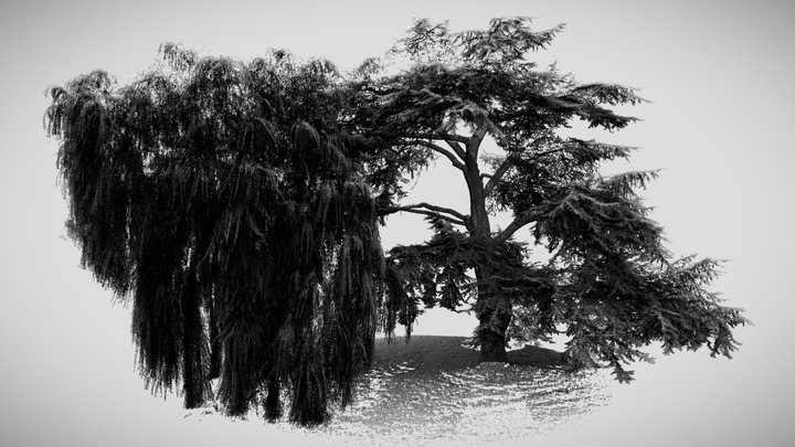 Cedar of Lebanon and Weeping Willow 3D Model