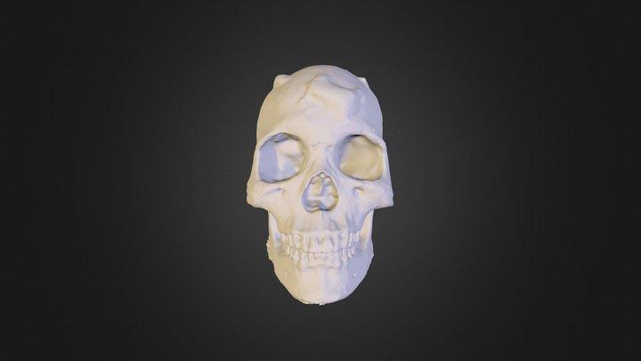 3d scull 3D Model