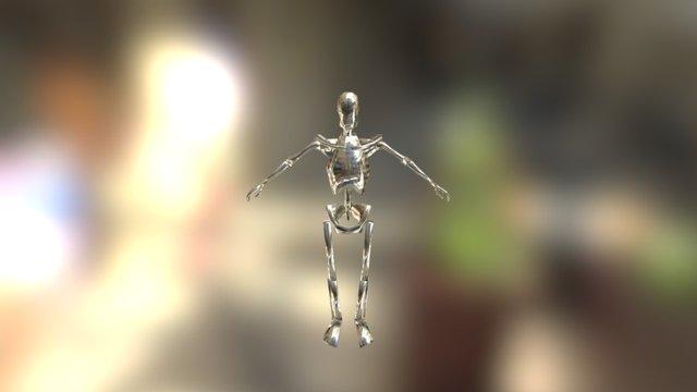 Skelly 2 3D Model