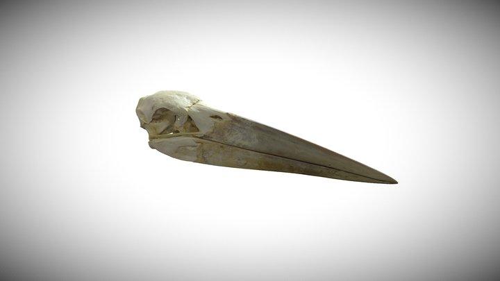 Marabou stork / CAS-ORN 89368 3D Model