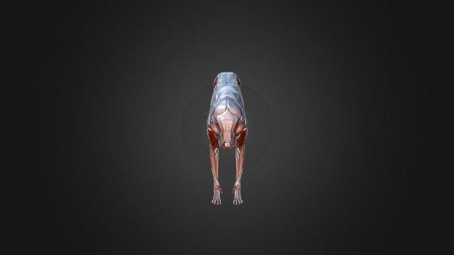 Feline Ecorche Dec 3D Model