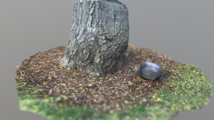 Tree and Rock Photoscan 3D Model