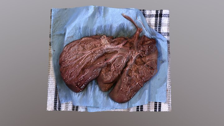 Lamb liver dissection 3D Model