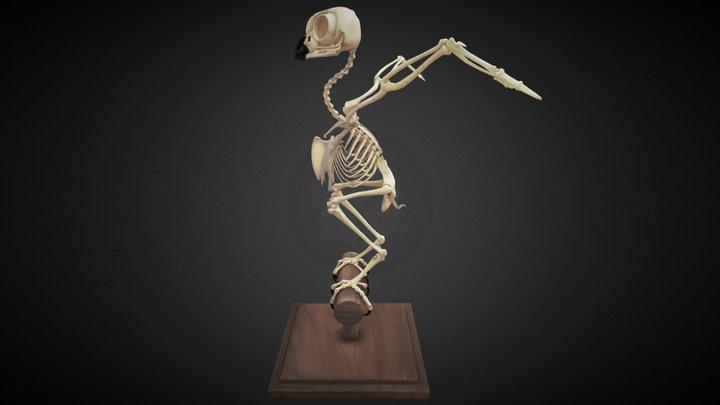 Owl skeleton 3D Model
