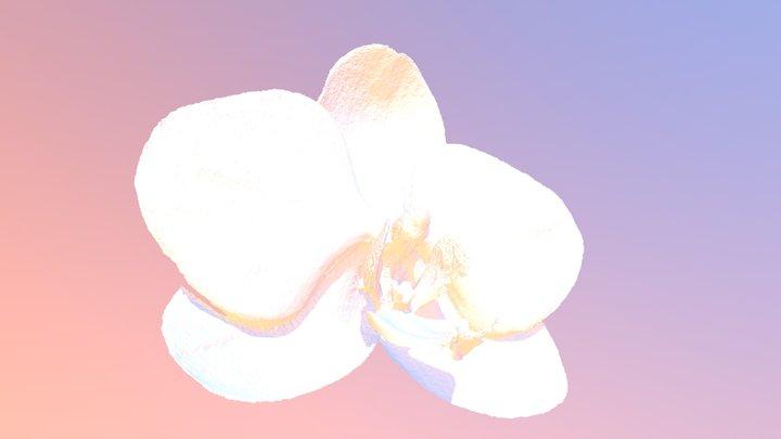 Orquidea Phalaenopsis 3D Model