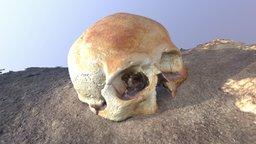 Sac Uayum Skull1 Final Simplified 3d Mesh 3D Model