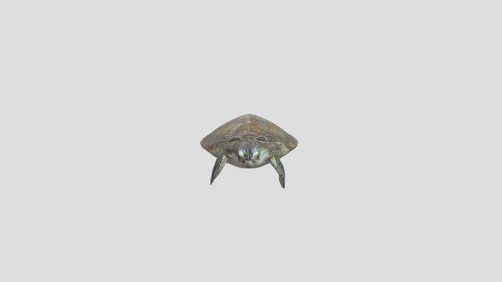 Green Turtle (Chelonia mydas) 3D Model