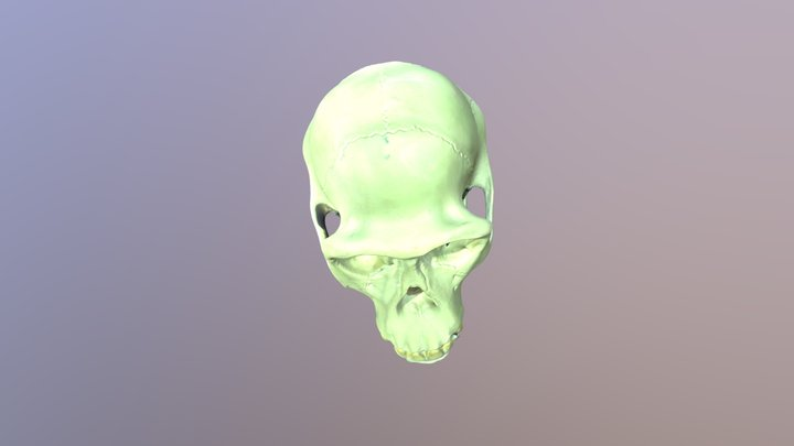 Chimpanze 3D Model