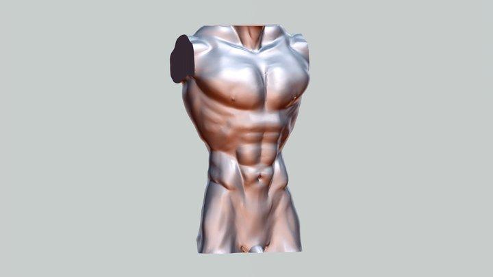 Torso 3D Model