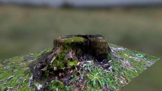 pieniek_02 (stump_02) 3D Model