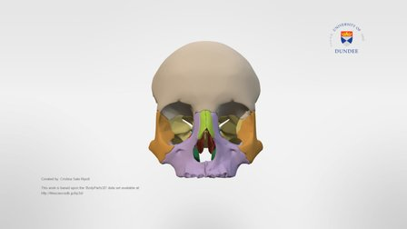 Bones of the orbit including palatine bones 3D Model