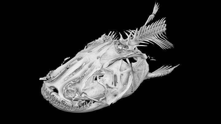 "3 Amur catfish_Head  /  ""Namazu"" 3D Model"