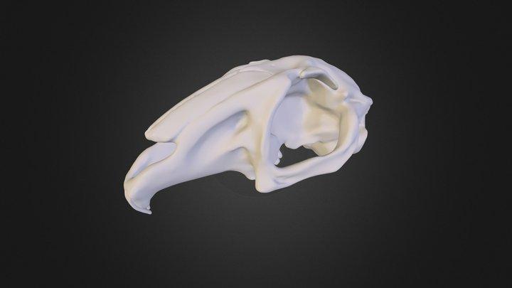 Liebre 3D Model