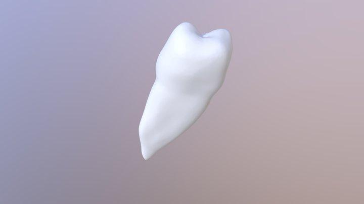 上颌第二前磨牙 3D Model