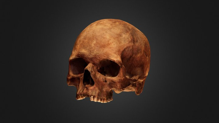 Skull from the 17th/18th century tomb 3D Model