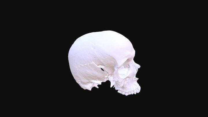Richard de W'Peton. 3D Model