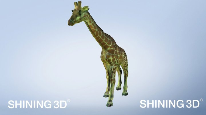 Giraffe Scanned by EinScan-S 3D Scanner 3D Model