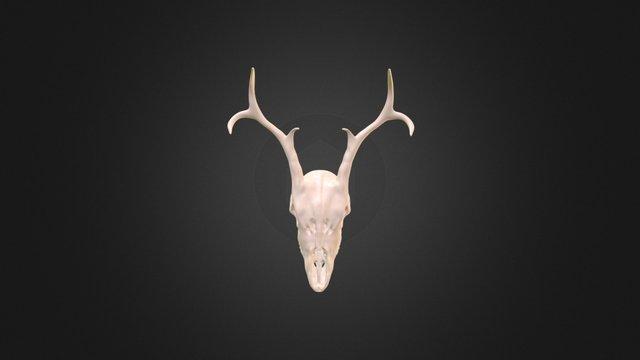 Stag_Skull 3D Model