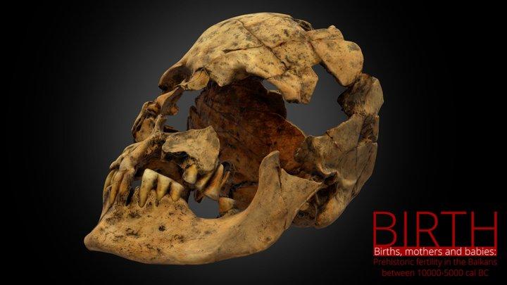 Govrlevo - cranial skeleton 3D Model