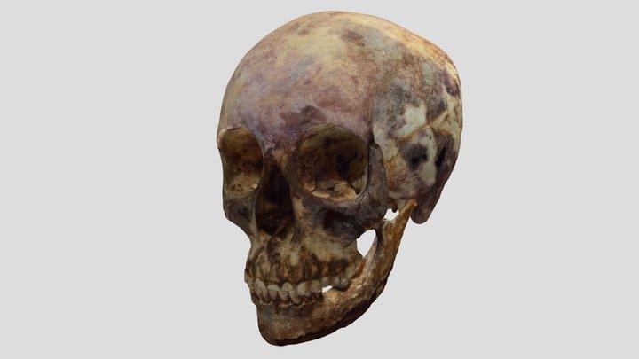 Roman Period Skull II 3D Model